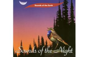 CD MUSICA | CD MUSICA SOUNDS OF THE NIGHT (PURE MUSIC, NO VOICES OR MUSIC ADDED)